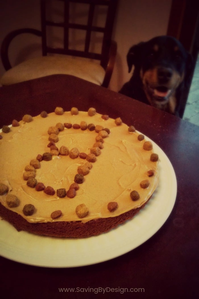 This Easy Dog Birthday Cake Is The Perfect Homemade Treat For Your S It