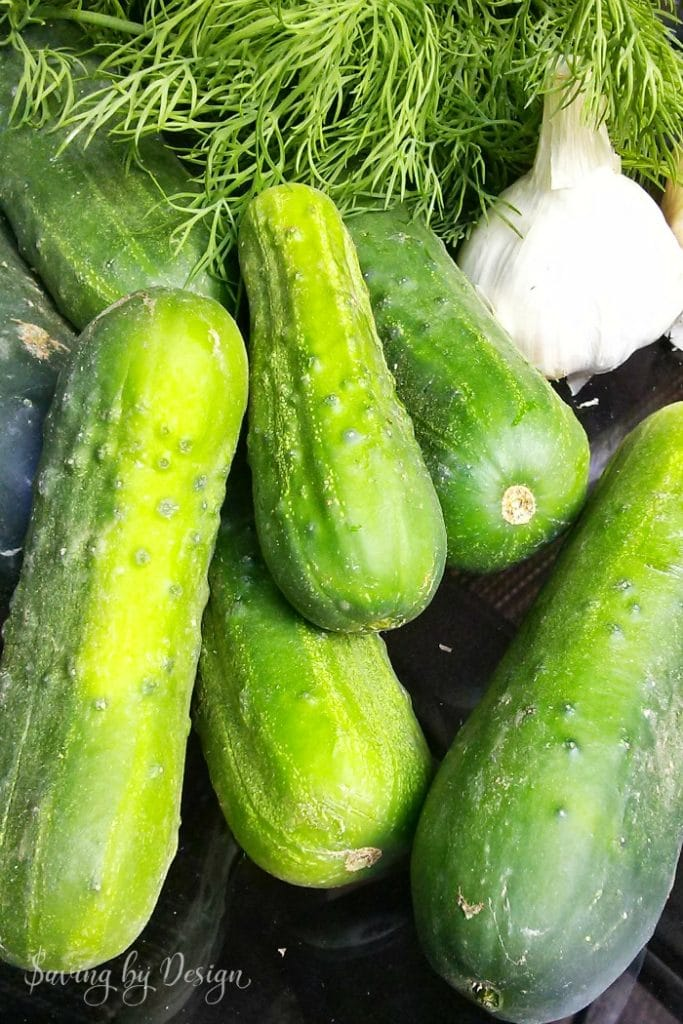 cucumbers, garlic, fresh dill for refrigerator pickles