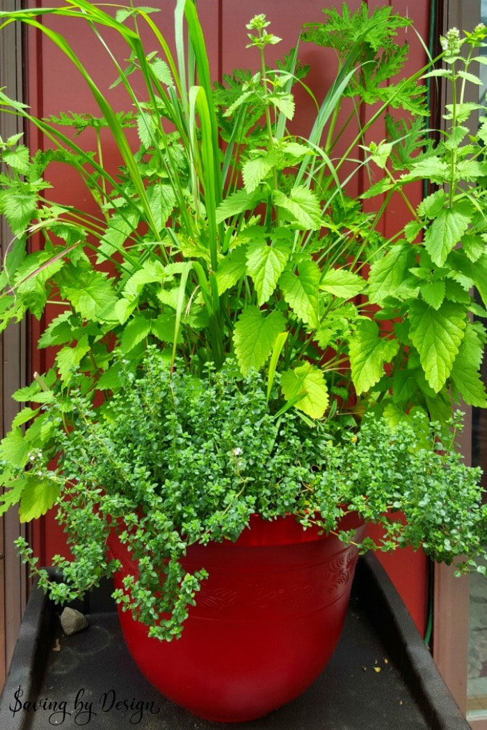 natural bug repellent planter