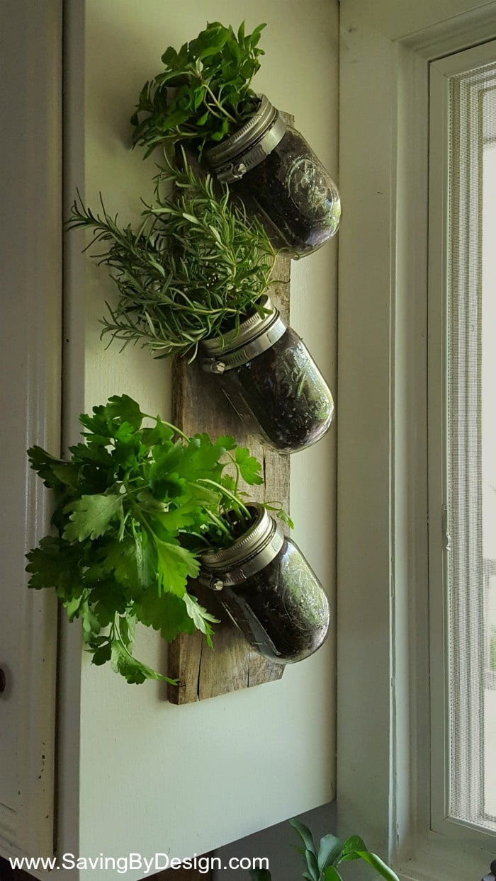 How to make an indoor wall mounted herb garden to enjoy fresh herbs mason jars clamps and a piece of wood are all you need to create workwithnaturefo
